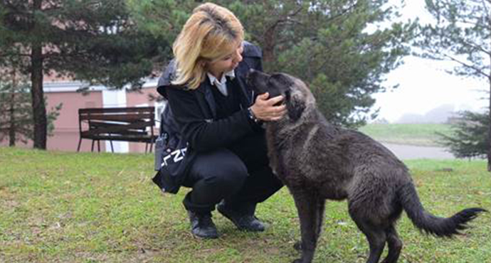 Saü Güvenliği Kampüs İçindeki Hayvanları Besliyor