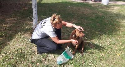 Bıçaklanarak Ölüme Terkedilen Sokak Köpeğine Güvenlik Görevlisi Sahip Çıktı