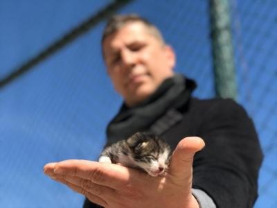 Yavru kediyi kalp masajı ve suni teneffüsle hayata bağladı