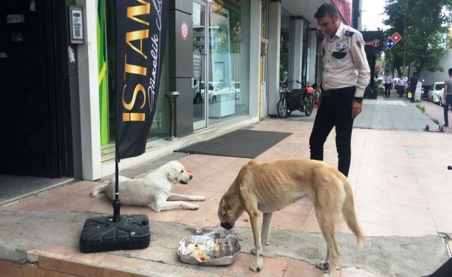 Özel Güvenlik Görevlisi, Öğle Yemeğini Sokak Köpekleriyle Paylaştı