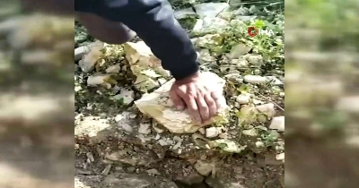 Çukura düşen kaplumbağaları kurtarmak için seferber oldular